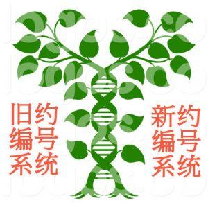 DNA双螺旋结构与新旧约双编号系统